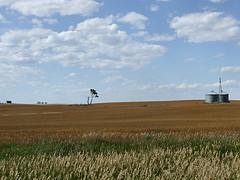 North Dakota cpa CPE equirements